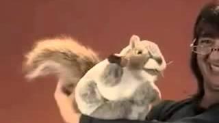 Gray Squirrel Puppet.flv