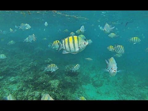 Snorkeling   Punta Cana  Gopro