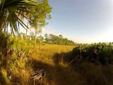Hiking at Big Cypress National Preserve