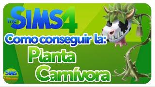 Como obtener la planta carnívora (cowplant) en Los Sims 4! - Tutorial español