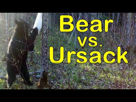 Bear, and Other Animals vs. the Ursack