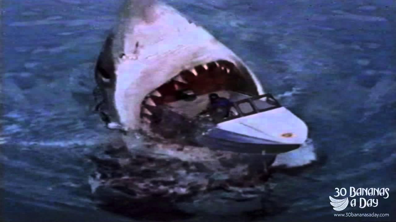 Megalodon Shark Attack Tourist Boat Off Sydney Harbour Australia: Real