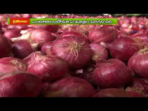Onion Farmers Face Problems with Low Price in Kurnool Market|Demand Minimum Support Price | CVR News