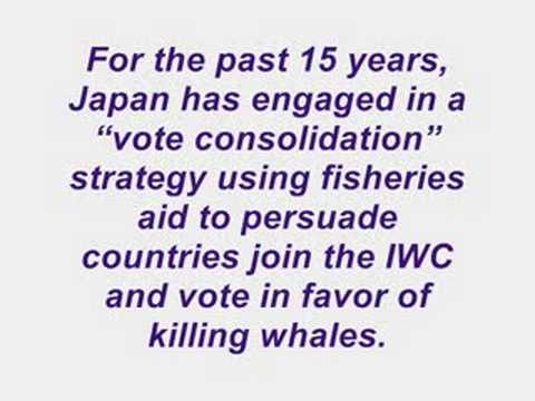 To Lift The Ban On Commercial Whaling The International Whaling Commission ( IWC ) Met Secretly Behind Close Doors. Sept 15-19 2008
