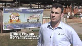 Meet the live sheep export trade