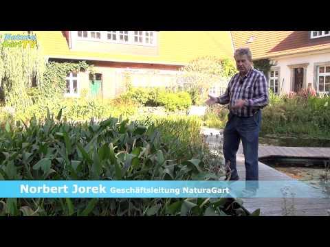 Nachrichten 11.09.2013: Schlamm Im Gartenteich Entfernen, Teichtreff, Uferbefestigung