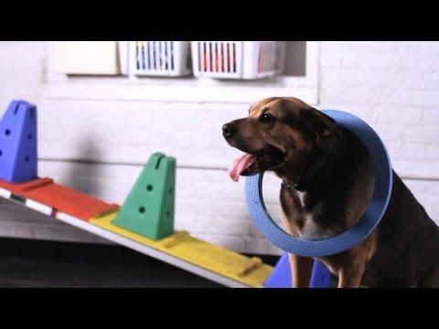 How to Teach Your Dog the Sea Lion Trick | Dog Tricks