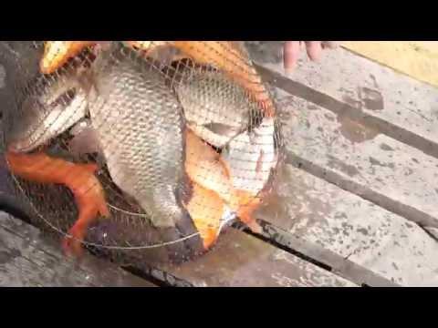 рыбалка на мулянке в екатеринбурге