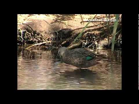 Australian Wild Life, Perth by Asiatravel.com