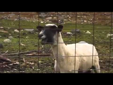 Heavy Metal Screaming Goat Remix Compilation