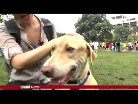 Malaysian Dogs: Is It Sinful To Be In Contact With Muslims?