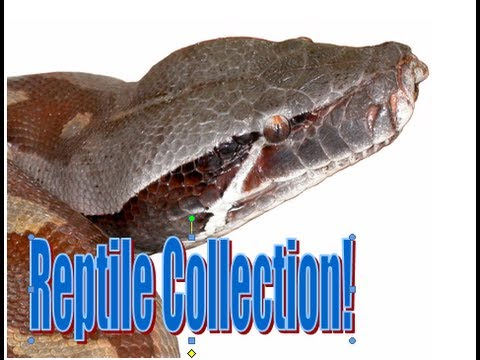 Reptile Collection May 2013!