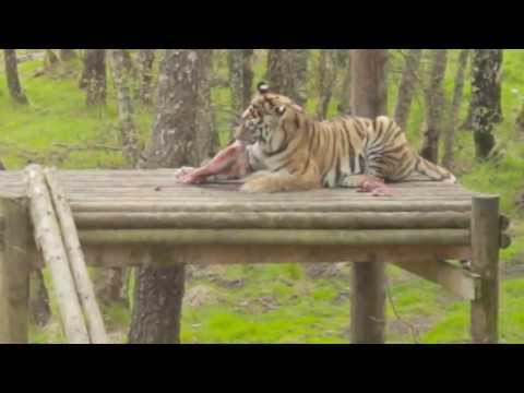 Highland Wildlife Park Adventure