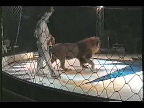 en Papudo leon ataca a su domador