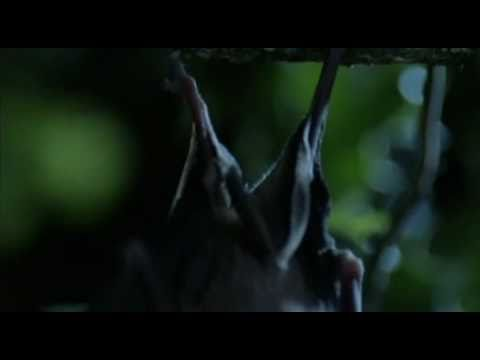 Greater Horseshoe Bats on The One Show (23/02/2011)