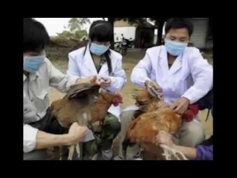 Bird Flu Killing 5 3 million Chickens in Iowa