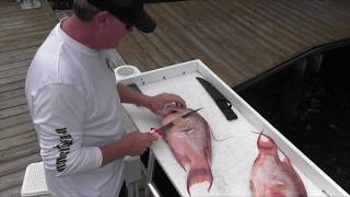 HOGFISH FILLET TUTORIAL
