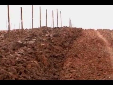 Ceviz Yetiştiricilği - Cevizde Toprak Hazırlığı, Bahçe Düzeni ve Sırta Dikim 5. Bölüm