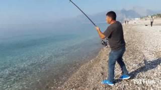 Antalya konyaalti sahili 30 kg kuzu avı ve suya salımı(Land Based Record Amberjack) CUMA KOKSAL