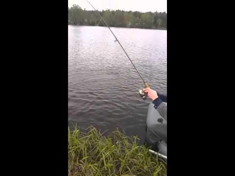 рыбалка. на фидер в ленобласти