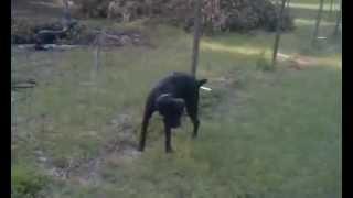 Perro Tonto orina cerca eléctrica, mira lo que sucede