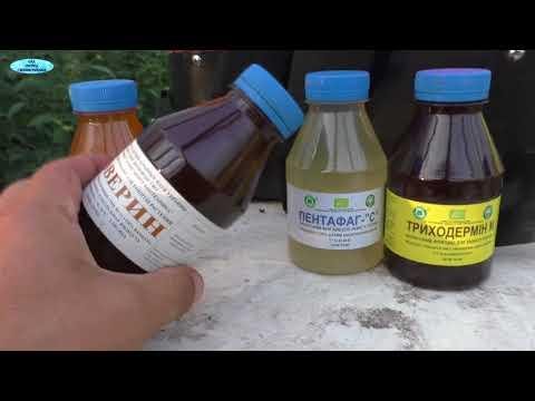 Основные препараты от вредителей побегов и листьев садовых и огородных растений – название и описание