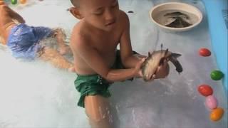 Seru Permainan Menangkap Ikan Untuk Anak [Catching Fish For Children Kids]-Mandi Bola