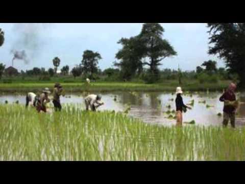 RFI Khmer Radio News on 31 July 2015,កសិករនៅខេត្តសៀមរាបខ្លះត្រៀមធ្វើចំណាកស្រុកទៅថៃបើសិន