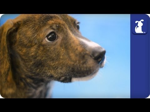 The Litter with Sharon Osbourne - Episode 11