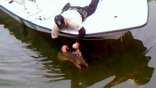 Baby Deer Rescued from Alligators !