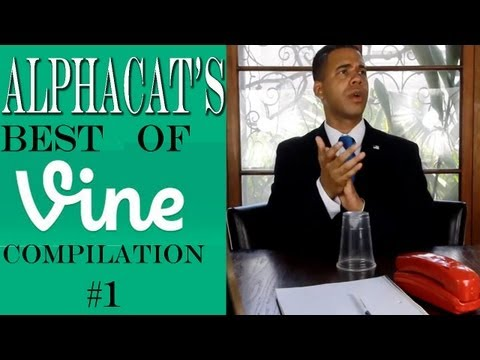 Alphacat s BEST OF VINE COMPILATION #1