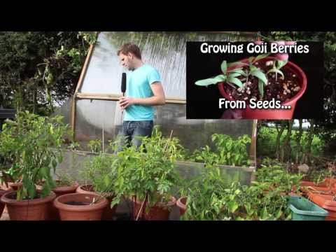 Garden Planning - Greenhouse. Meat Rabbits. Aquaponics. Chickens and more...