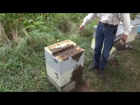 Michael Palmer   Catching A Bee Hive Before It Swarms