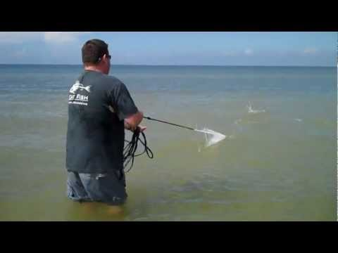 commercial wade fishing with a 12ft cast net
