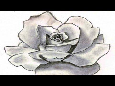 Видео как нарисовать кувшинку карандашом поэтапно
