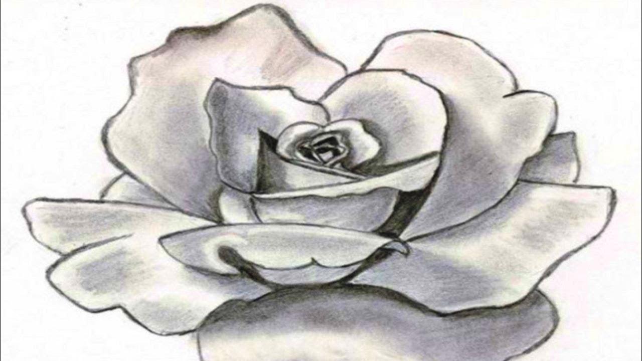 Фото карандашом цветы для начинающих