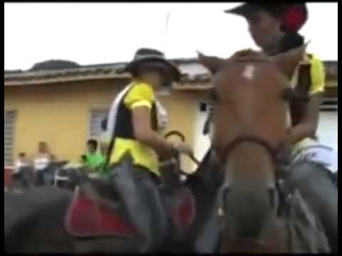 funny video overexcited horse