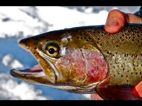 Mid-Winter Rainbow Trout - Ice Season Finale  --