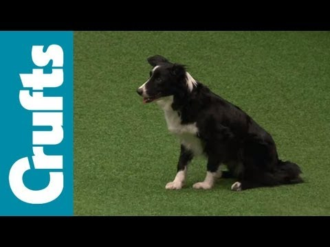 Agility Championship Final - Crufts 2012