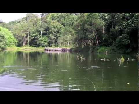 Pacu Fishing at Empangan Air Kuning Malaysia