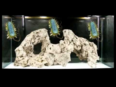 Reef Saver Eco Rox Live Rock Bulk Reef Supply Brstv Youtube