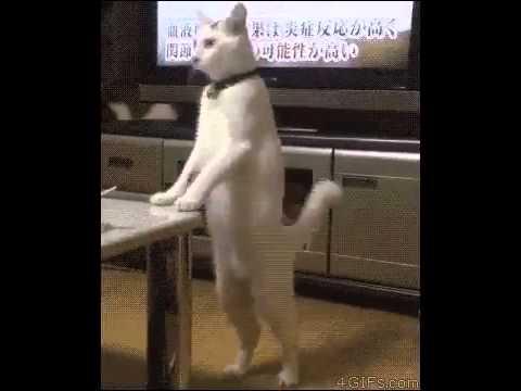 lawak kucing robot