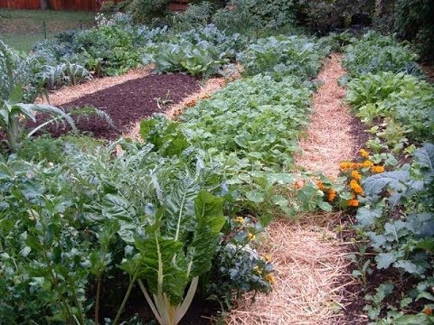 raised garden bed ideas.diy raised garden beds.raised garden bed designs.garden raised beds