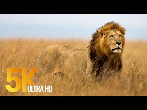 5K African Wildlife Documentary Film - Etosha National Park, Namibia, Africa