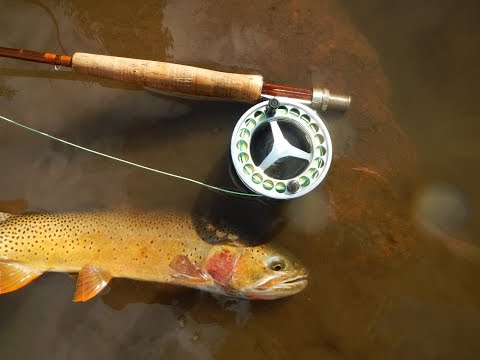 Yellowstone National Park, Wyoming, Cutthroat Trout Fly Fishing 2014