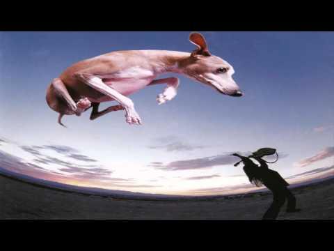 Paul Gilbert - Flying Dog (Full Album)
