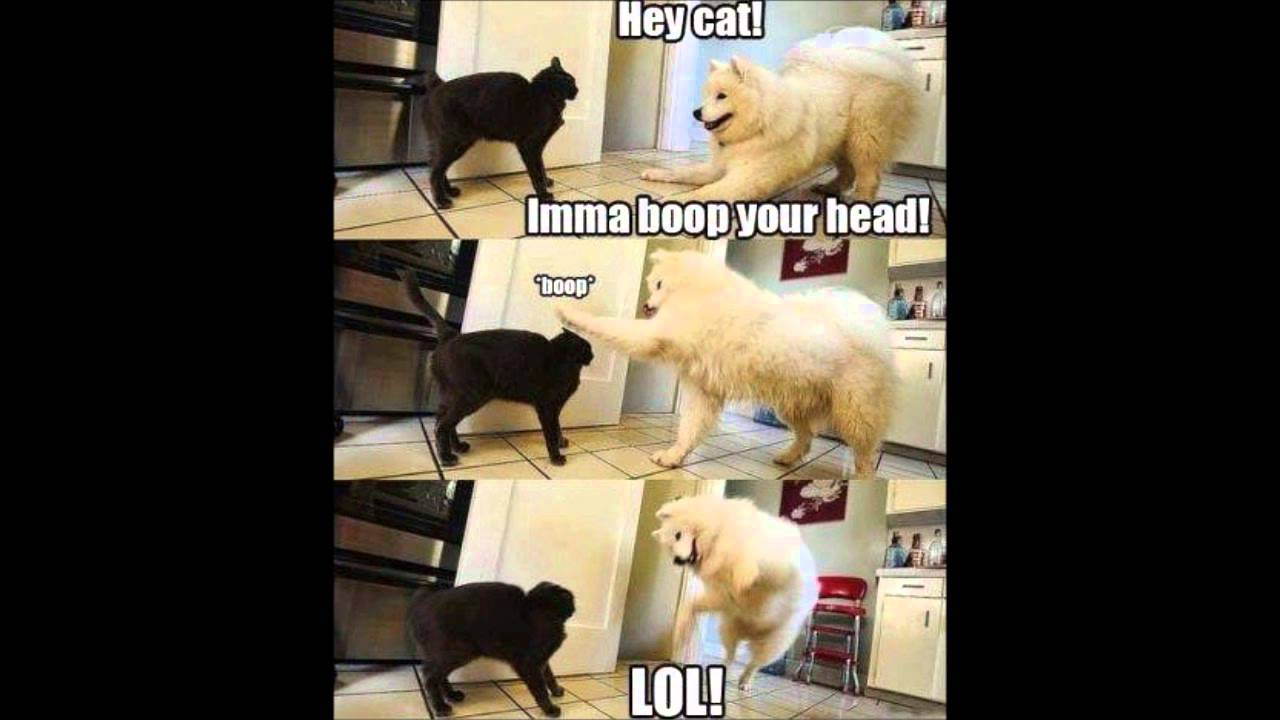 Cats And Dogs Bad Talking Cat