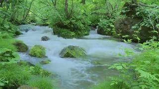 Beautiful Relaxing Music , Calm Music, Soft Music, Instrumental Music, Sleep Meditation, 1