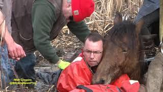 Dramatic horse rescue in North Smithfield, RI