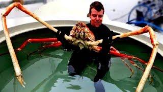 10 DISTURBING DEEP SEA CREATURES | Twisted Tens #52